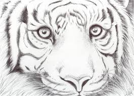 coloring pages wonderful animal pictures draw sketches drawings