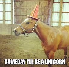 Unicorn Memes - unicorn horse meme meme rewards