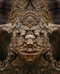 creatures reflected images of tree bark reveal the faces