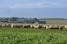 chambre d agriculture seine maritime chambre d agriculture seine maritime 12 une troupe de brebis