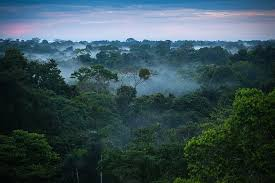 amazon basin the story behind how the amazon rainforest got its name