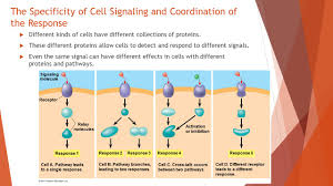 response cell signaling leads to regulation of transcription or