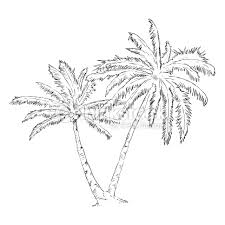 vector single sketch palm tree vector art thinkstock