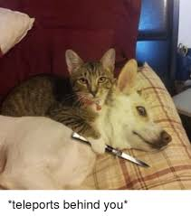 Sneaky Cat Meme - teleports behind you nothing personal kid know your meme