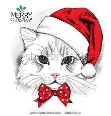 christmas cat stock images royalty free images u0026 vectors