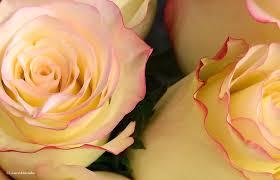 happy valentine u0027s day to you share love song lyrics u2014 plus