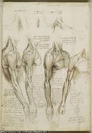 the startling accuracy of leonardo da vinci u0027s anatomical sketches