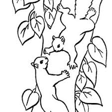 nut coloring page squirrel is so busy coloring page squirrel is so busy coloring