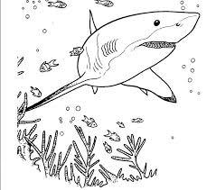 print shark coloring 31 free coloring book shark