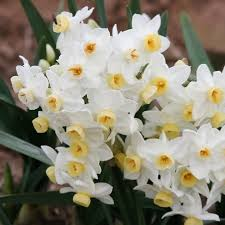 for sale buy flower bulbs in bulk u0026 save