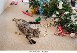 cat humour stock photos cat humour stock images