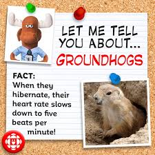5 facts about groundhogs explore awesome activities