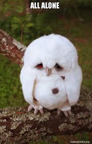All Alone Meme - all alone sad owl make a meme
