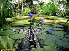 Botanical Gardens El Paso Water Gardeners International Gardens With Aquatics Displays
