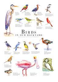 Florida birds images The birds of south florida jpg