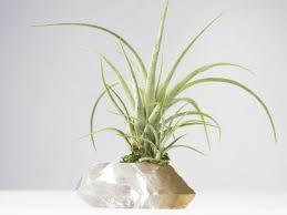 best plant for desk jumbo air plant terrarium quartz crystal desk accessories