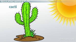 xerophytes definition adaptation u0026 examples video u0026 lesson