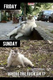 Morning After Meme - the morning after cat the previous weekend meme guy