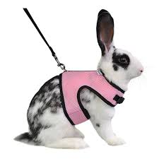 pet supplies niteangel adjustable soft harness with elastic