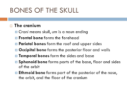 How Many Bones Form The Cranium Chapter 3 The Skeletal System Structures And Functions