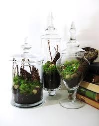 terrarium apothecary jars woodland dreams pinterest terraria