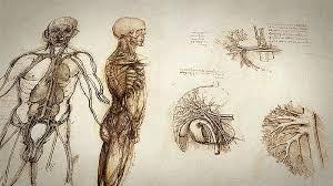 Leonardo Da Vinci Human Anatomy Drawings Secrets Of The Dead Leonardo The Man Who Saved Science Kpbs