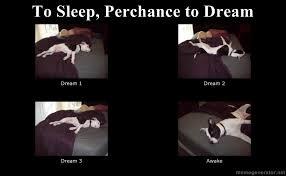 Dream Meme - meme to sleep perchance to dream bellepo
