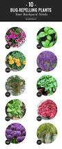 33 best plants for birds 10 bug repelling plants your backyard needs helloglow co