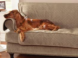 Dog Blankets For Sofa by Sofa Covers Grip Tight Furniture Protector Orvis