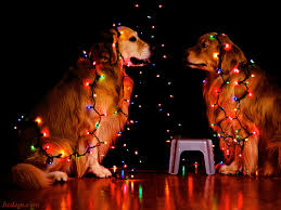 christmas light staple gun bz dogs hanging the christmas lights