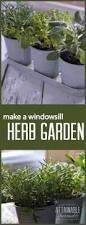 Herb Garden Winter - grow herbs indoors 5 herbs that thrive inside indoor herbs