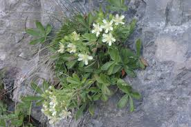 plant with white flowers image collections flower decoration design