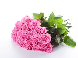 Meaning Of Pink Roses Flowers - 25 best hd flowers ideas on pinterest lotus flowers lotus