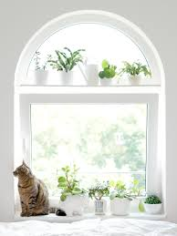 socker greenhouse living with plants and cats