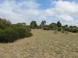 native plants adelaide australian native plants archives trevor u0027s travels trevor u0027s