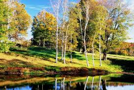 Vermont landscapes images Forest birch trees vermont red rivers amazing orange awesome jpg
