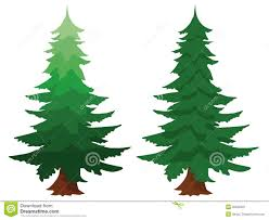 two evergreen fir trees stock image image 32346221