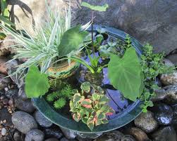 making a pond in a pot hgtv