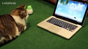 cats react to a video for cats summer mouse hunt video game