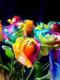 113 best rainbow roses images on pinterest rainbow roses