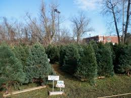 christmas trees for sale lion s club christmas tree sale begins friday we