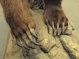 grizzly claws can a trained human beat a grizzly in a to fight