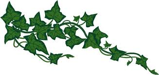 ivy vine clipart clipart collection vines flowers design
