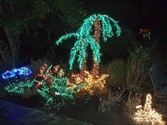 lighted palm tree beautiful christmas lights pinterest