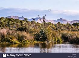 native plants new zealand new zealand native plants on a lake shore stock photo royalty