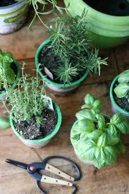 Growing Herbs Inside Indoor Herb Garden Burnt Macaroni
