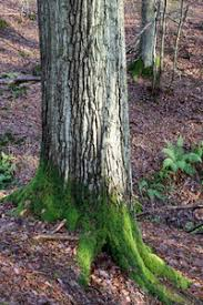 free stock photos rgbstock free stock images mossy tree base