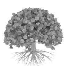 White Oak Tree Drawing Round Oak Tree 3d Model Cgtrader