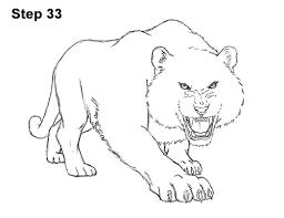 draw tiger roaring