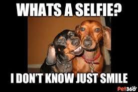 Wiener Dog Meme - adorable memes shared here animalbehaviorc doxie love pinterest